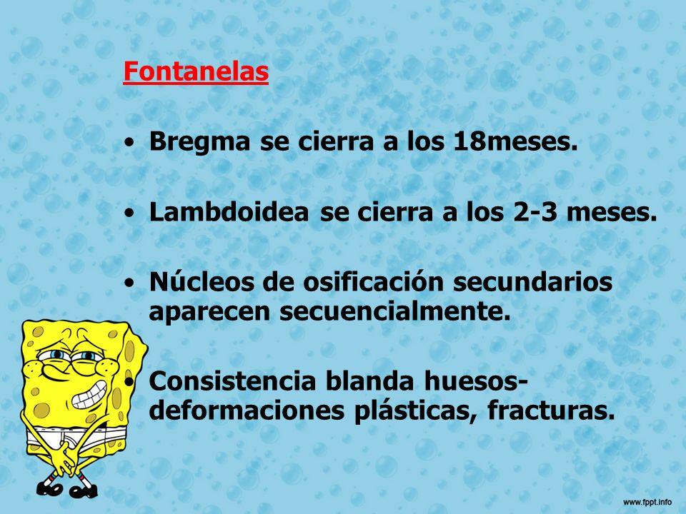 Fontanelas Bregma se cierra a los 18meses. Lambdoidea se cierra a los 2-3 meses. Núcleos de osificación secundarios aparecen secuencialmente. Consiste