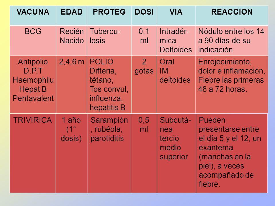 VACUNAEDADPROTEGDOSIVIAREACCION BCGRecién Nacido Tubercu- losis 0,1 ml Intradér- mica Deltoides Nódulo entre los 14 a 90 días de su indicación Antipol