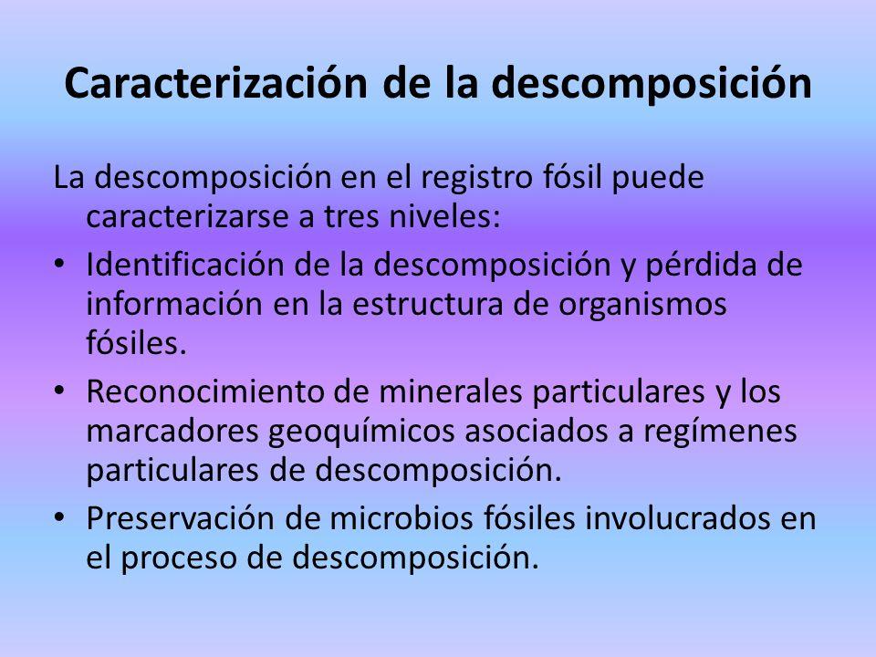 Caracterización de la descomposición La descomposición en el registro fósil puede caracterizarse a tres niveles: Identificación de la descomposición y