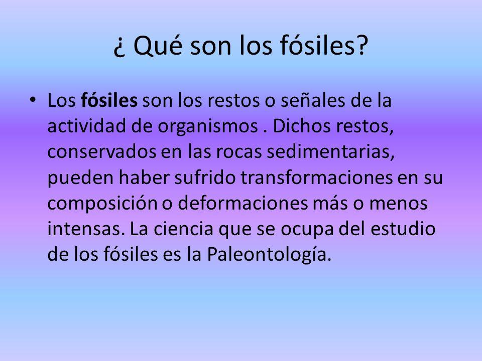 ¿ Qué son los fósiles? Los fósiles son los restos o señales de la actividad de organismos. Dichos restos, conservados en las rocas sedimentarias, pued