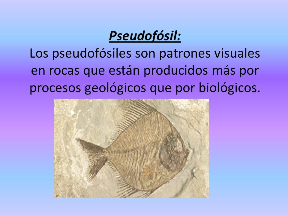 Pseudofósil: Los pseudofósiles son patrones visuales en rocas que están producidos más por procesos geológicos que por biológicos.
