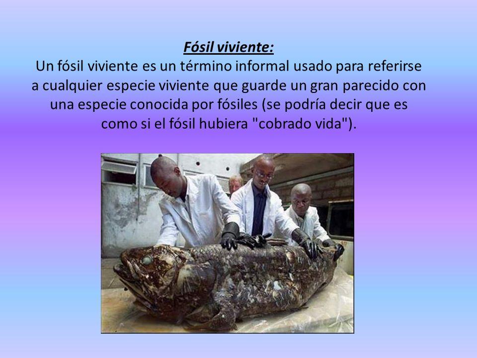 Fósil viviente: Un fósil viviente es un término informal usado para referirse a cualquier especie viviente que guarde un gran parecido con una especie