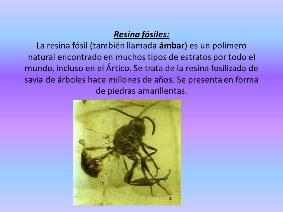 Resina fósiles: La resina fósil (también llamada ámbar) es un polímero natural encontrado en muchos tipos de estratos por todo el mundo, incluso en el