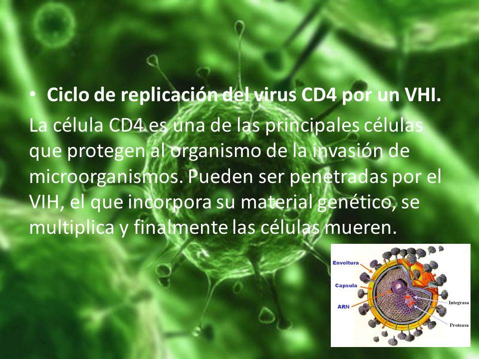 Ciclo de replicación del virus CD4 por un VHI. La célula CD4 es una de las principales células que protegen al organismo de la invasión de microorgani