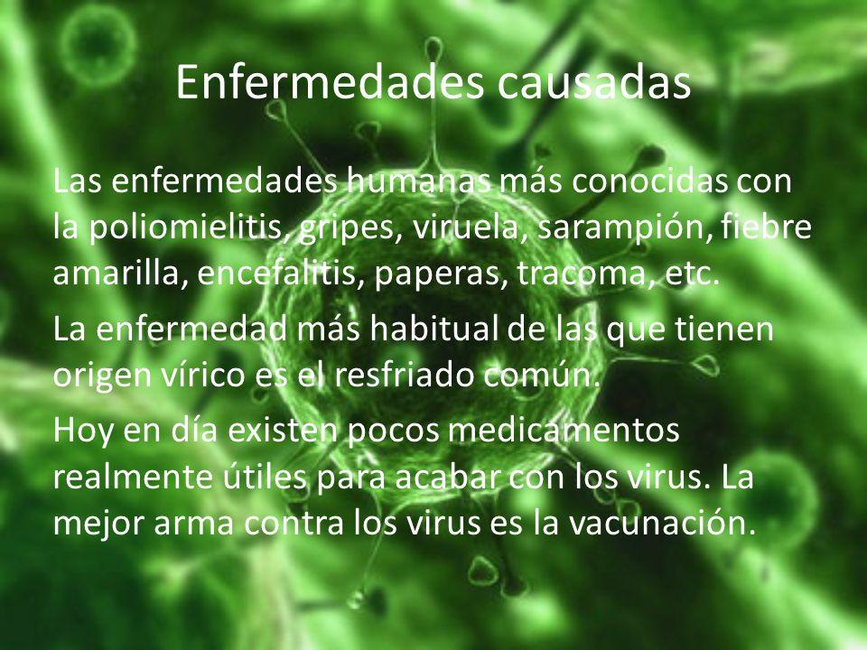 Enfermedades causadas Las enfermedades humanas más conocidas con la poliomielitis, gripes, viruela, sarampión, fiebre amarilla, encefalitis, paperas,