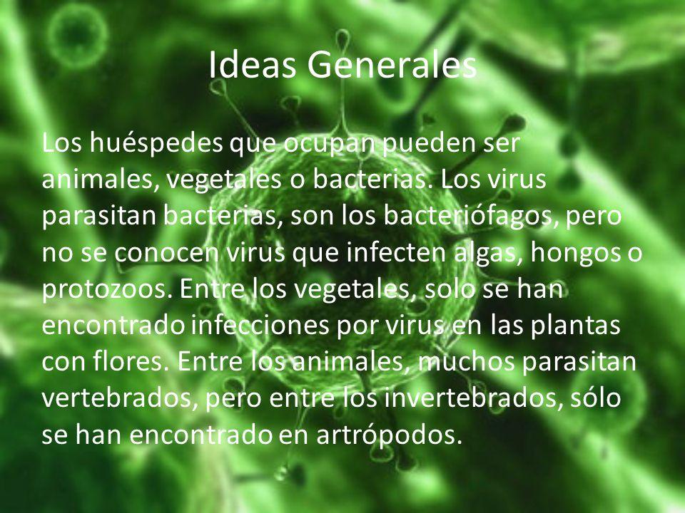 Ideas Generales Los huéspedes que ocupan pueden ser animales, vegetales o bacterias. Los virus parasitan bacterias, son los bacteriófagos, pero no se