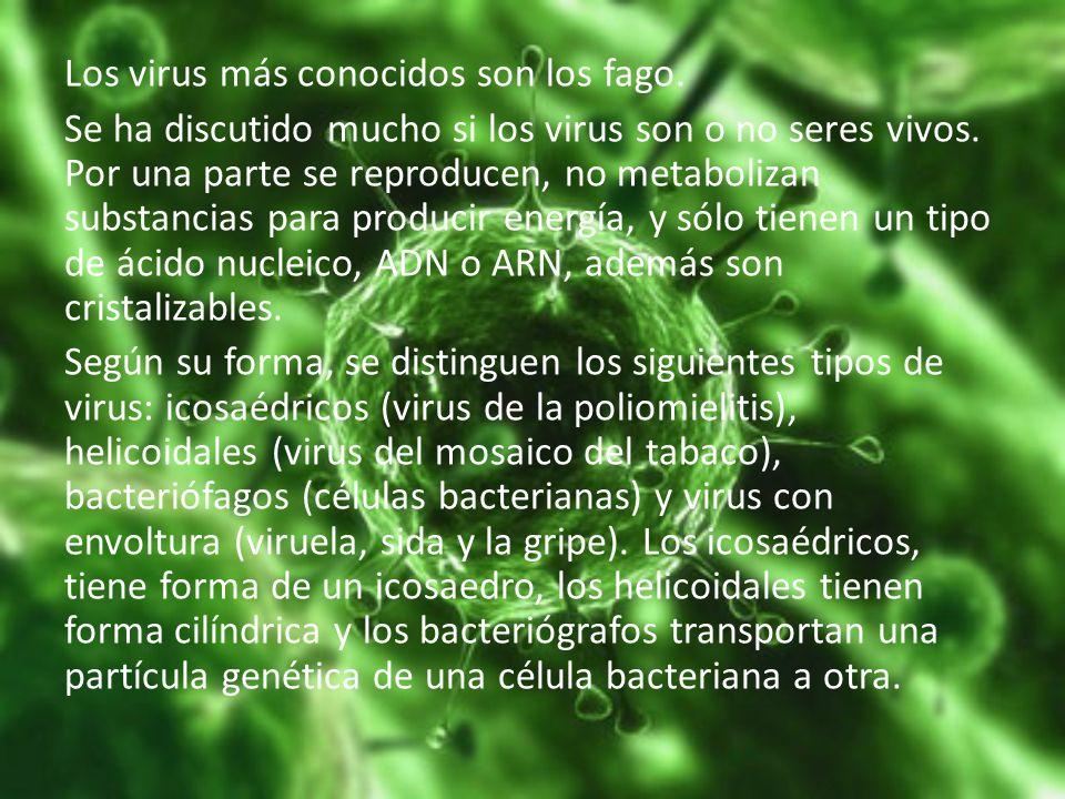 Los virus más conocidos son los fago. Se ha discutido mucho si los virus son o no seres vivos. Por una parte se reproducen, no metabolizan substancias