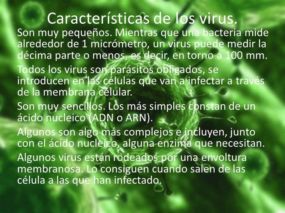 Características de los virus. Son muy pequeños. Mientras que una bacteria mide alrededor de 1 micrómetro, un virus puede medir la décima parte o menos