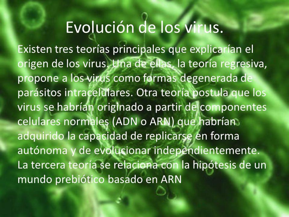 Evolución de los virus. Existen tres teorías principales que explicarían el origen de los virus. Una de ellas, la teoría regresiva, propone a los viru