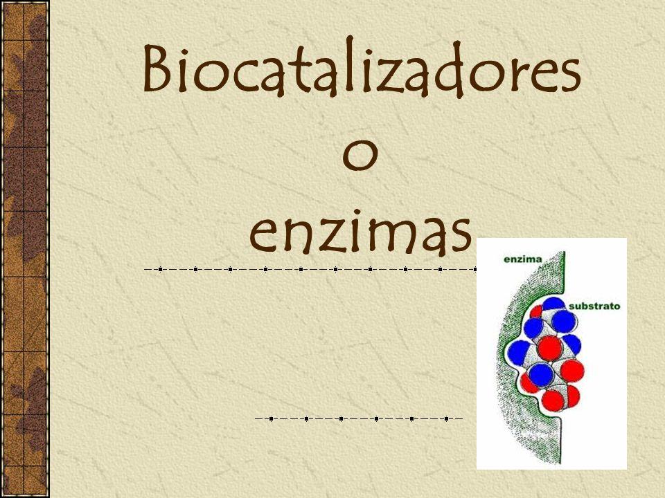 Biocatalizadores o enzimas