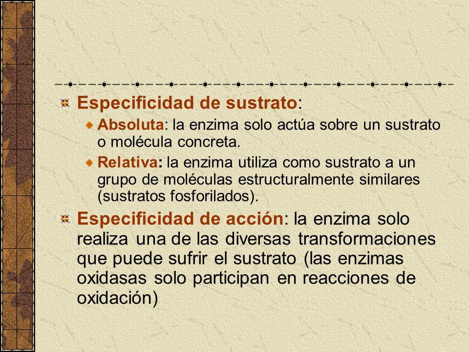 Especificidad de sustrato: Absoluta: la enzima solo actúa sobre un sustrato o molécula concreta. Relativa: la enzima utiliza como sustrato a un grupo