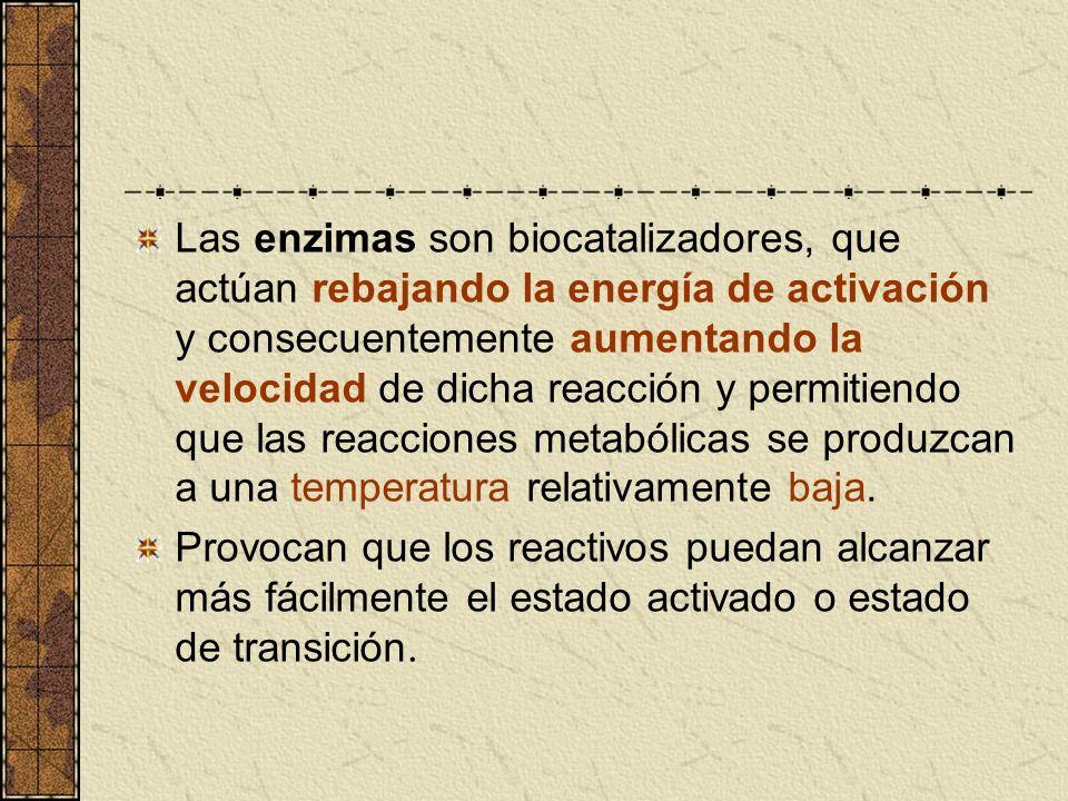 Las enzimas son biocatalizadores, que actúan rebajando la energía de activación y consecuentemente aumentando la velocidad de dicha reacción y permiti