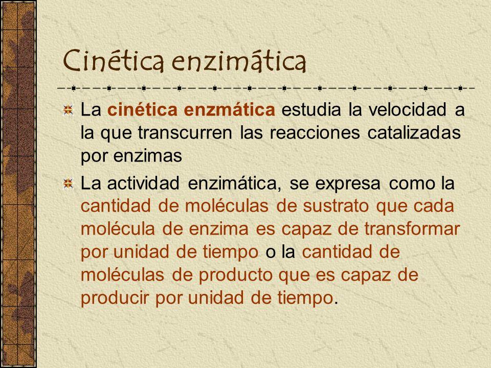 Cinética enzimática La cinética enzmática estudia la velocidad a la que transcurren las reacciones catalizadas por enzimas La actividad enzimática, se