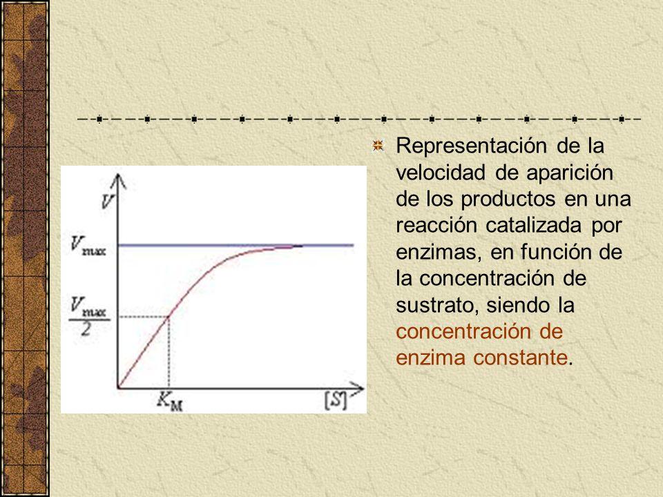 Representación de la velocidad de aparición de los productos en una reacción catalizada por enzimas, en función de la concentración de sustrato, siend