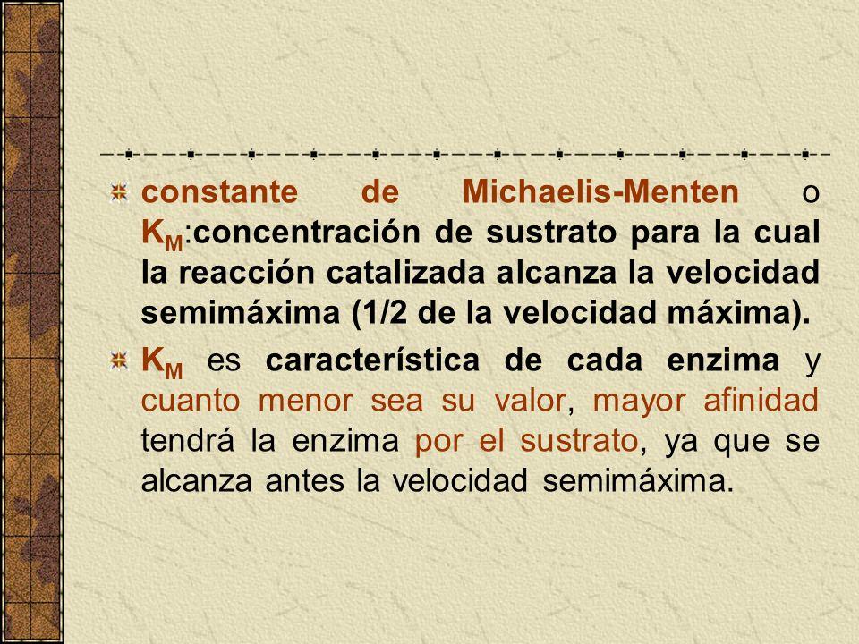 constante de Michaelis-Menten o K M :concentración de sustrato para la cual la reacción catalizada alcanza la velocidad semimáxima (1/2 de la velocida