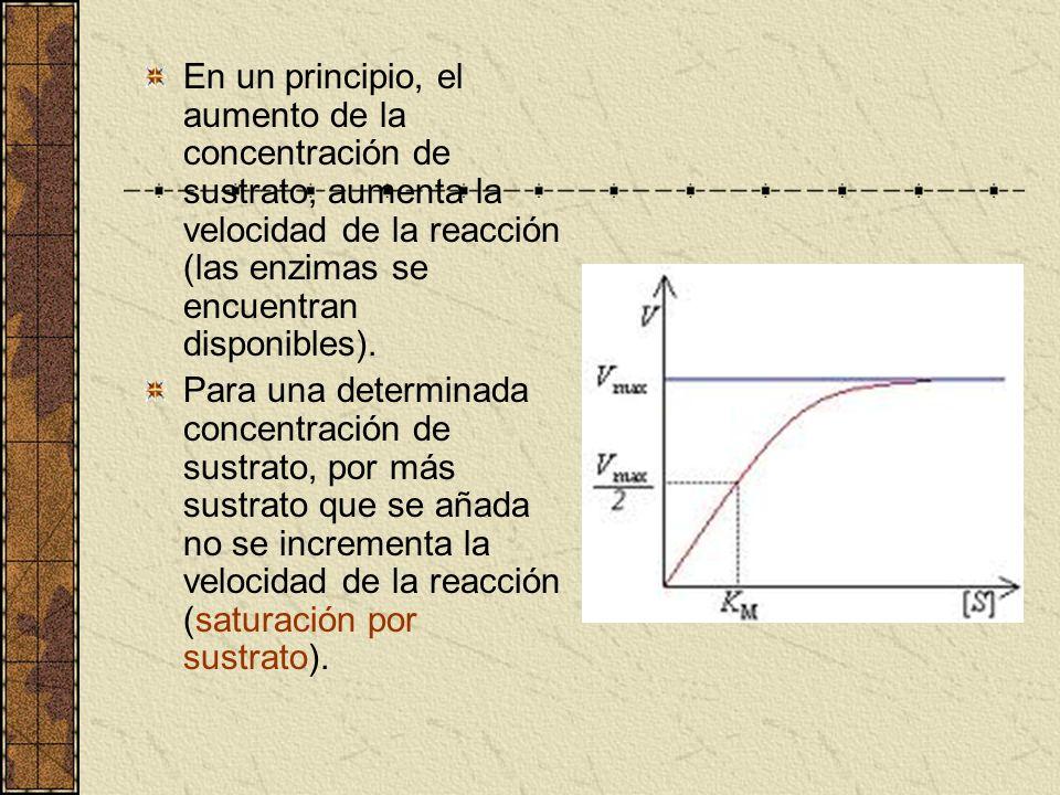 En un principio, el aumento de la concentración de sustrato, aumenta la velocidad de la reacción (las enzimas se encuentran disponibles). Para una det