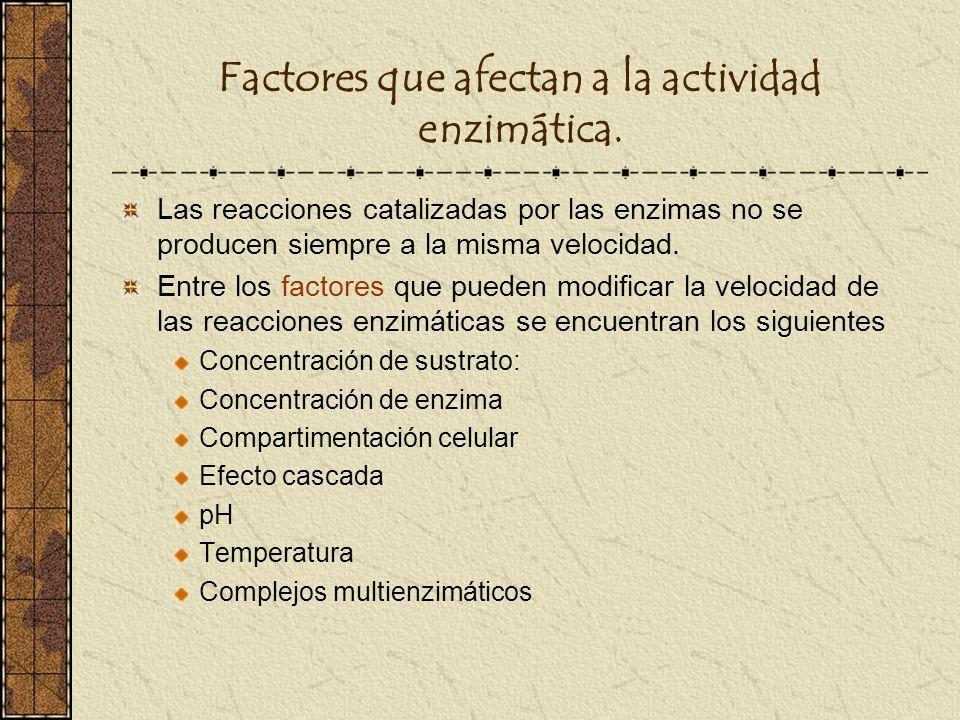 Factores que afectan a la actividad enzimática. Las reacciones catalizadas por las enzimas no se producen siempre a la misma velocidad. Entre los fact