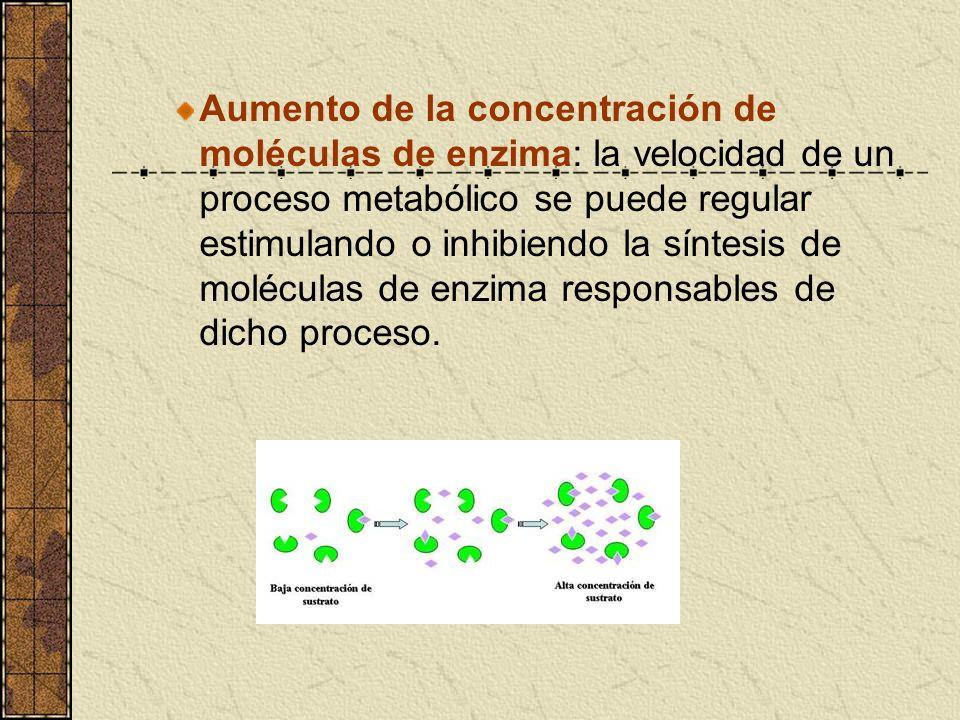 Aumento de la concentración de moléculas de enzima: la velocidad de un proceso metabólico se puede regular estimulando o inhibiendo la síntesis de mol