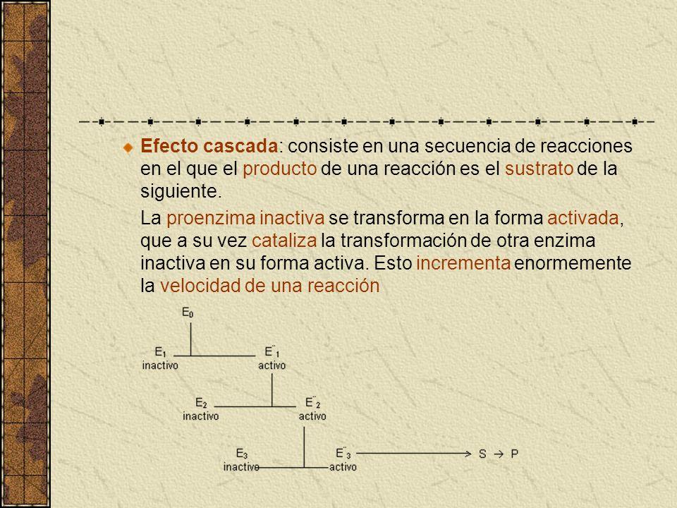 Efecto cascada: consiste en una secuencia de reacciones en el que el producto de una reacción es el sustrato de la siguiente. La proenzima inactiva se