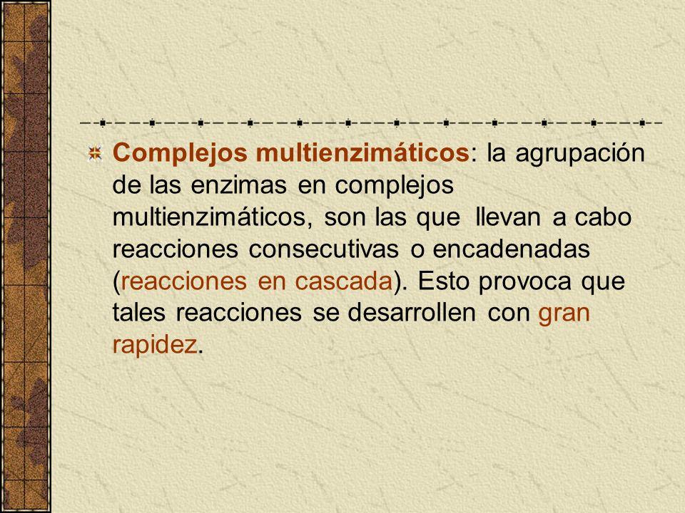 Complejos multienzimáticos: la agrupación de las enzimas en complejos multienzimáticos, son las que llevan a cabo reacciones consecutivas o encadenada