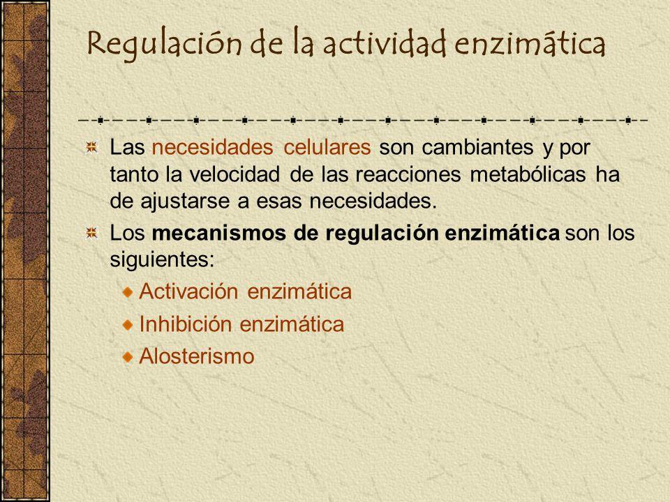Regulación de la actividad enzimática Las necesidades celulares son cambiantes y por tanto la velocidad de las reacciones metabólicas ha de ajustarse