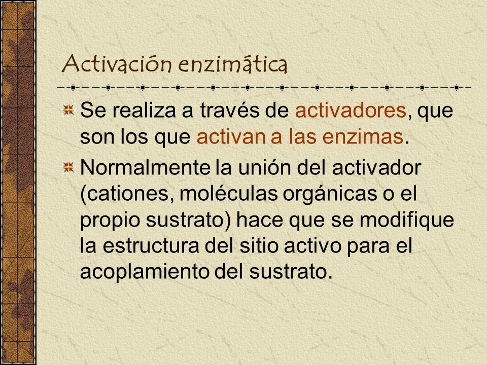 Activación enzimática Se realiza a través de activadores, que son los que activan a las enzimas. Normalmente la unión del activador (cationes, molécul