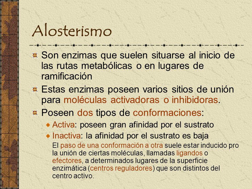 Alosterismo Son enzimas que suelen situarse al inicio de las rutas metabólicas o en lugares de ramificación Estas enzimas poseen varios sitios de unió