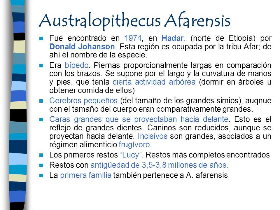 Australopithecus Afarensis Fue encontrado en 1974, en Hadar, (norte de Etiopía) por Donald Johanson. Esta región es ocupada por la tribu Afar; de ahí