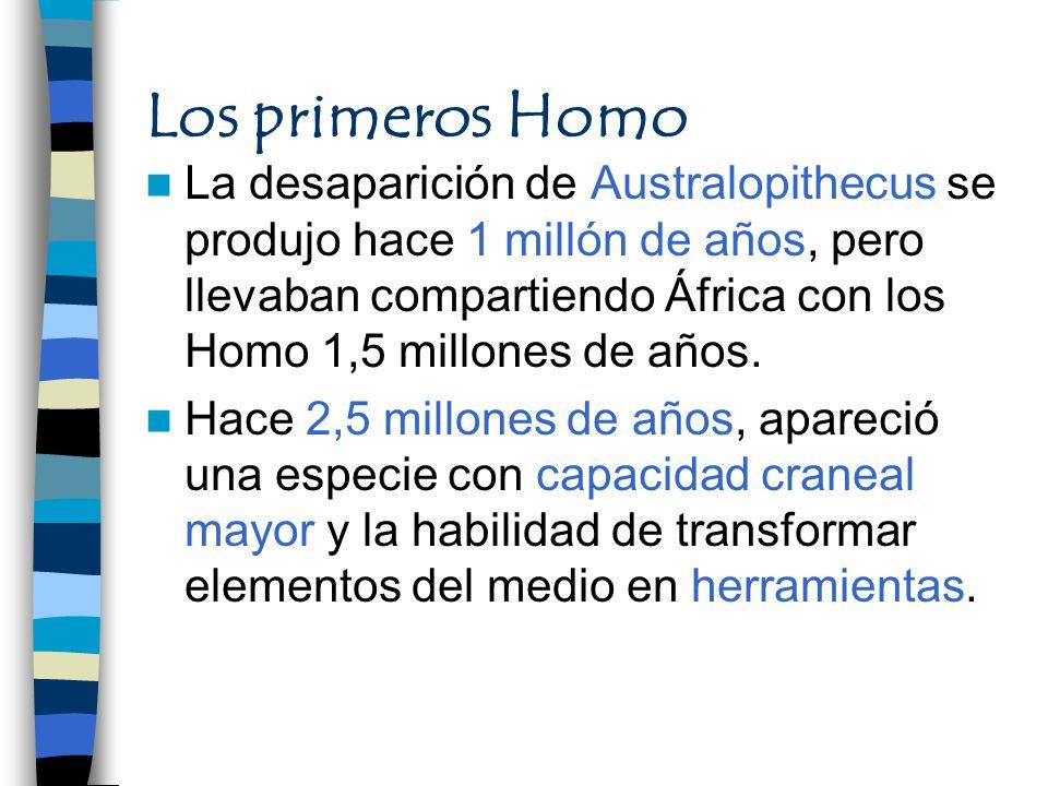 Los primeros Homo La desaparición de Australopithecus se produjo hace 1 millón de años, pero llevaban compartiendo África con los Homo 1,5 millones de