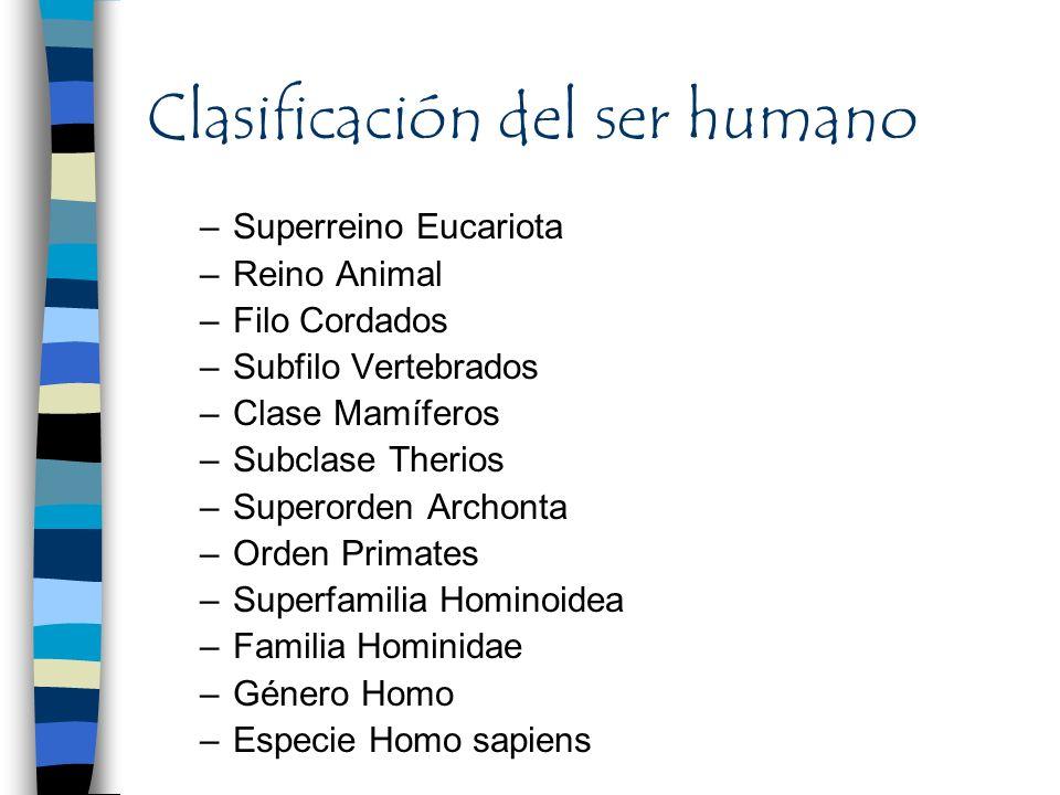 Clasificación del ser humano –Superreino Eucariota –Reino Animal –Filo Cordados –Subfilo Vertebrados –Clase Mamíferos –Subclase Therios –Superorden Ar
