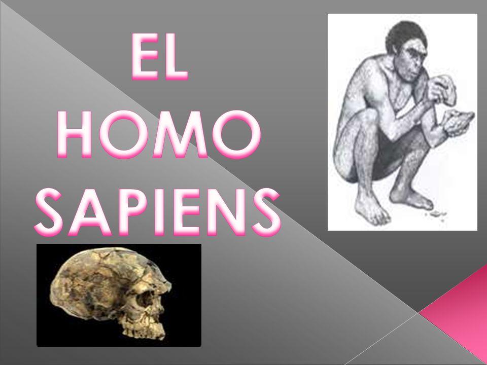 1.- Origen del Homosapiens.2.