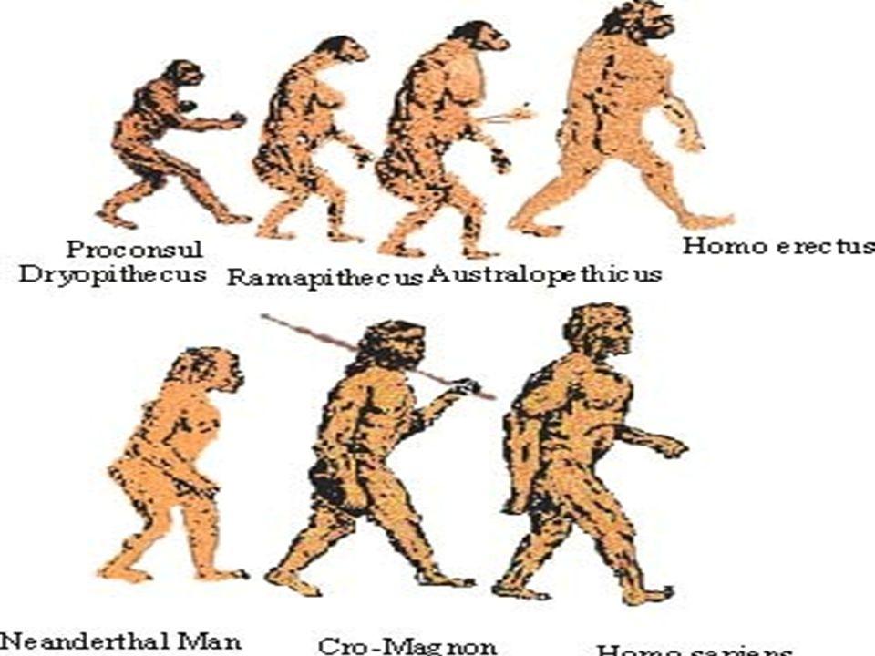 http://www.slideshare.net/amilcarcordo va/homo-sapiens-49280 http://www.slideshare.net/amilcarcordo va/homo-sapiens-49280 http://www.youtube.com/watch?v=Z9D oYjZ1oOE http://www.youtube.com/watch?v=Z9D oYjZ1oOE