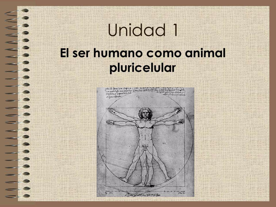 Unidad 1 El ser humano como animal pluricelular