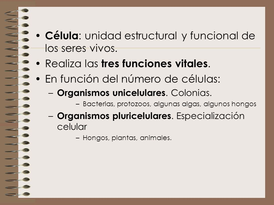 Célula : unidad estructural y funcional de los seres vivos. Realiza las tres funciones vitales. En función del número de células: – Organismos unicelu