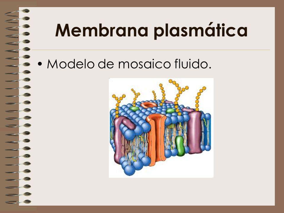 Membrana plasmática Modelo de mosaico fluido.