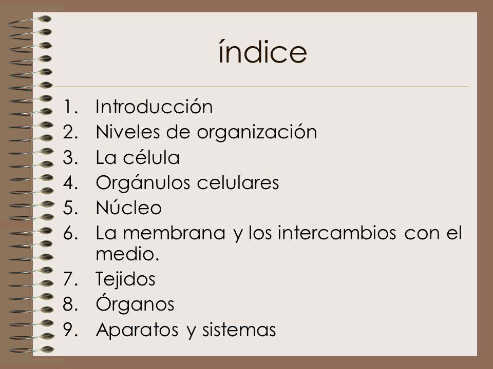 índice 1.Introducción 2.Niveles de organización 3.La célula 4.Orgánulos celulares 5.Núcleo 6.La membrana y los intercambios con el medio. 7.Tejidos 8.
