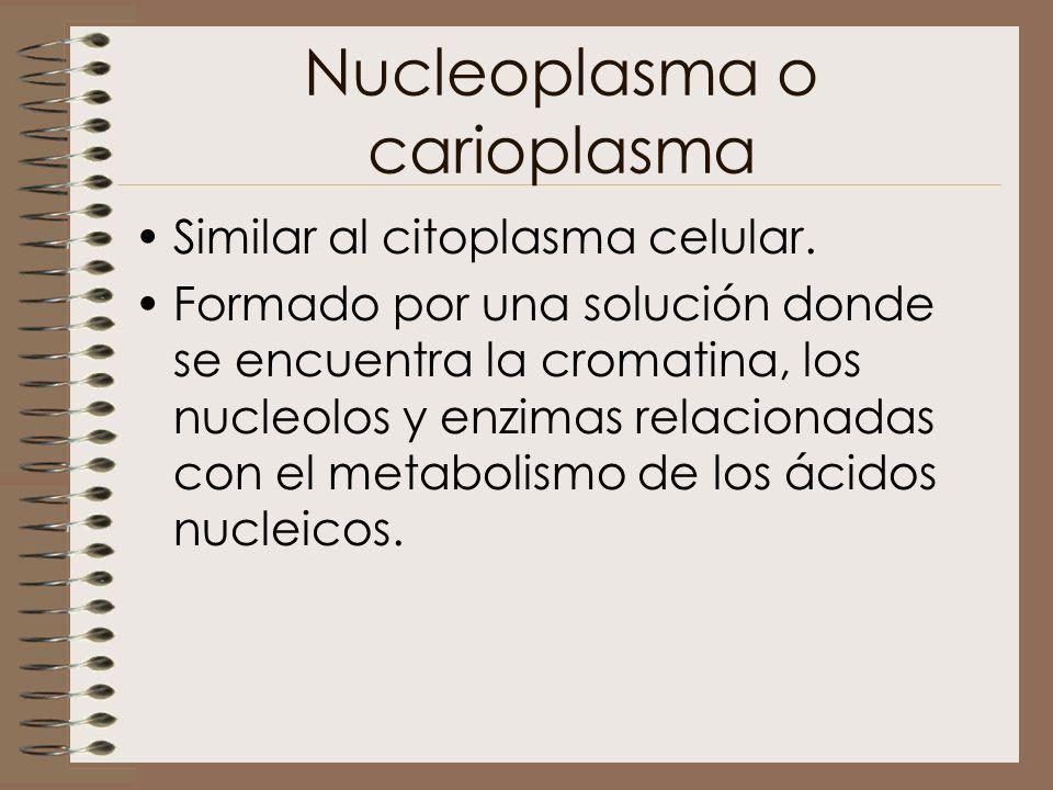 Nucleoplasma o carioplasma Similar al citoplasma celular. Formado por una solución donde se encuentra la cromatina, los nucleolos y enzimas relacionad