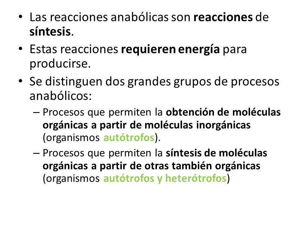 Las reacciones anabólicas son reacciones de síntesis. Estas reacciones requieren energía para producirse. Se distinguen dos grandes grupos de procesos