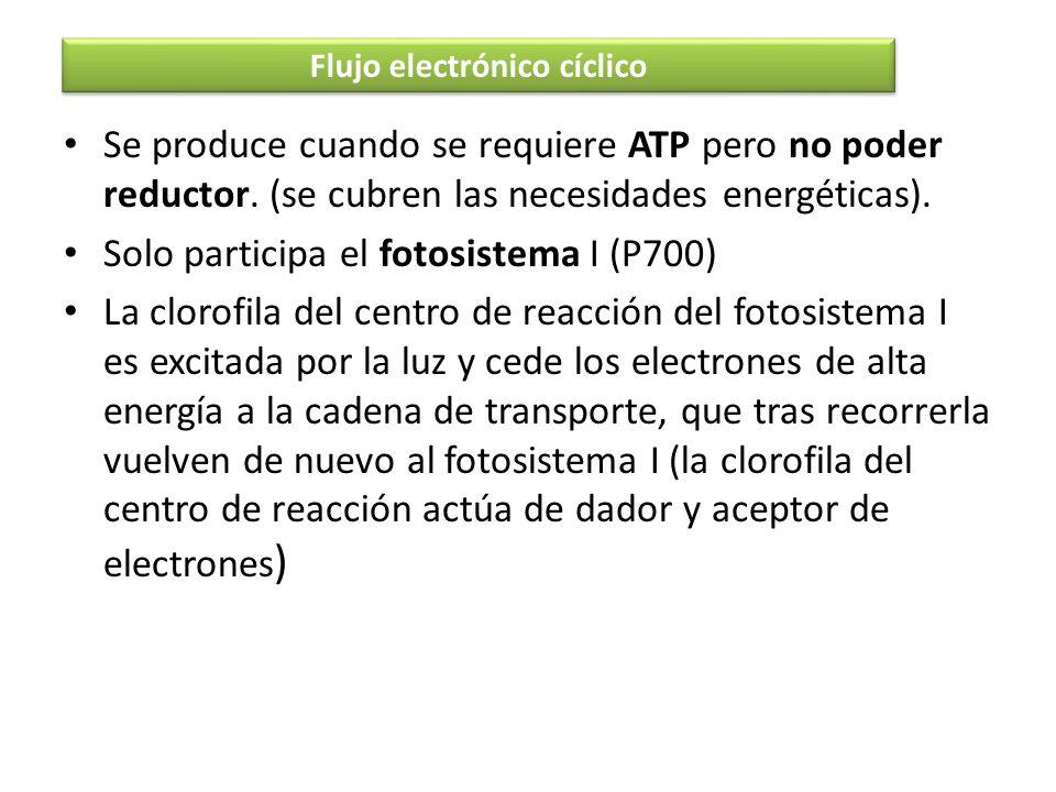 Se produce cuando se requiere ATP pero no poder reductor. (se cubren las necesidades energéticas). Solo participa el fotosistema I (P700) La clorofila