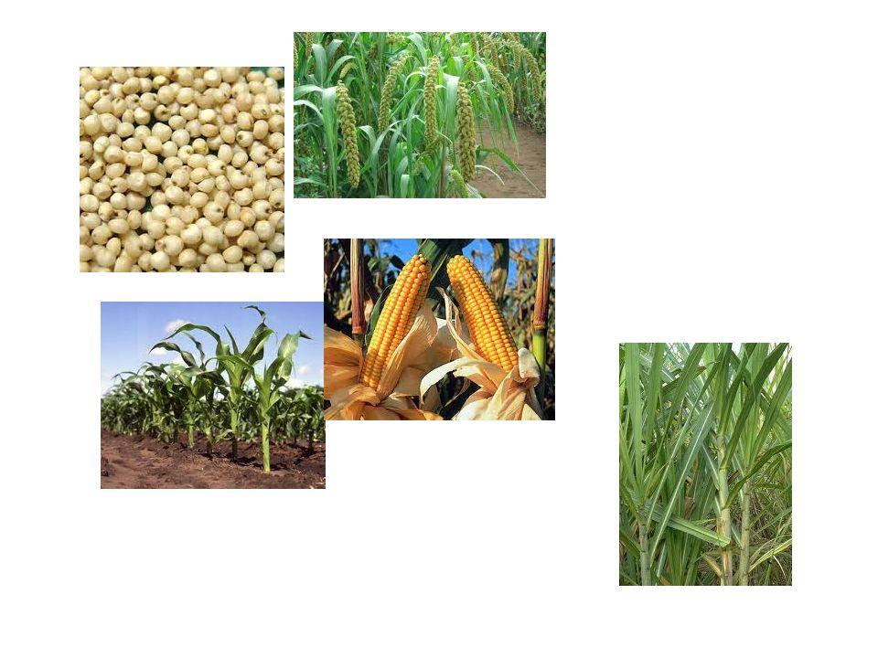 Factores que influyen en la fotosíntesis 1.Concentración de CO 2 ambiental 2.Concentración de O 2 ambiental 3.Humedad 4.Temperatura 5.Intensidad luminosa 6.Tipo de luz
