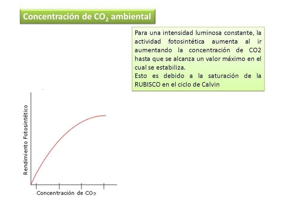 Concentración de CO 2 ambiental Para una intensidad luminosa constante, la actividad fotosintética aumenta al ir aumentando la concentración de CO2 ha