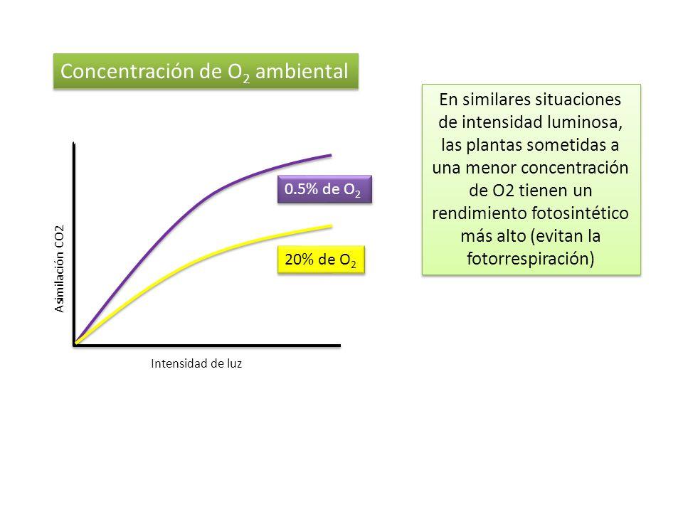 Concentración de O 2 ambiental 0.5% de O 2 20% de O 2 Asimilación CO2 Intensidad de luz En similares situaciones de intensidad luminosa, las plantas s