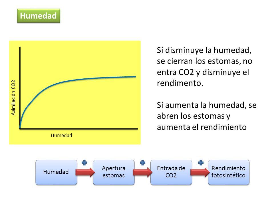 Humedad Asimilación CO2 Humedad Si disminuye la humedad, se cierran los estomas, no entra CO2 y disminuye el rendimento. Si aumenta la humedad, se abr