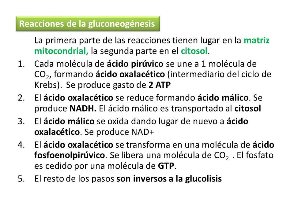 La primera parte de las reacciones tienen lugar en la matriz mitocondrial, la segunda parte en el citosol. 1.Cada molécula de ácido pirúvico se une a