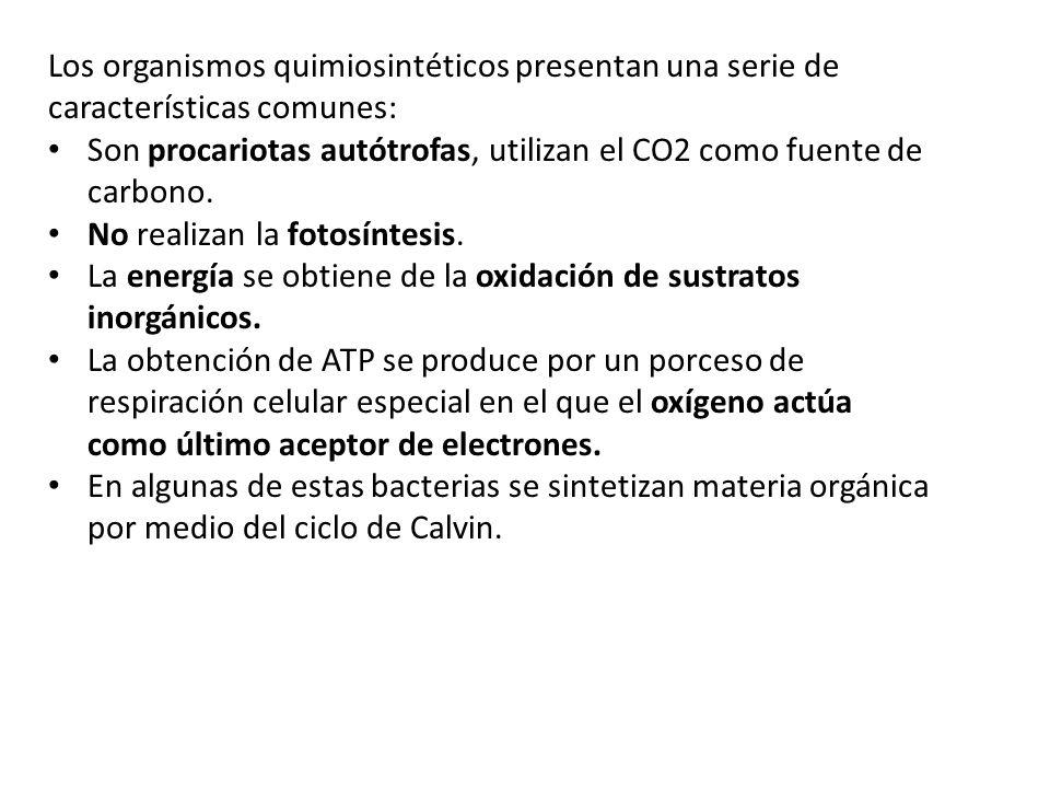 Los organismos quimiosintéticos presentan una serie de características comunes: Son procariotas autótrofas, utilizan el CO2 como fuente de carbono. No