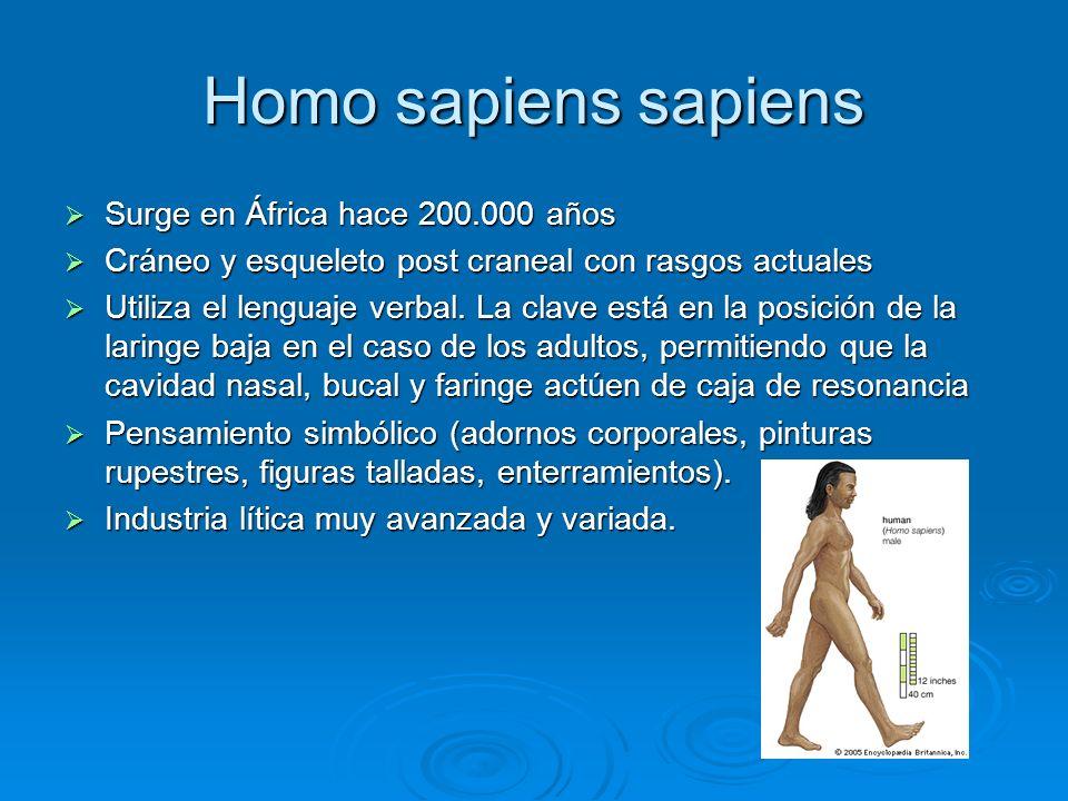 Homo sapiens sapiens Surge en África hace 200.000 años Surge en África hace 200.000 años Cráneo y esqueleto post craneal con rasgos actuales Cráneo y