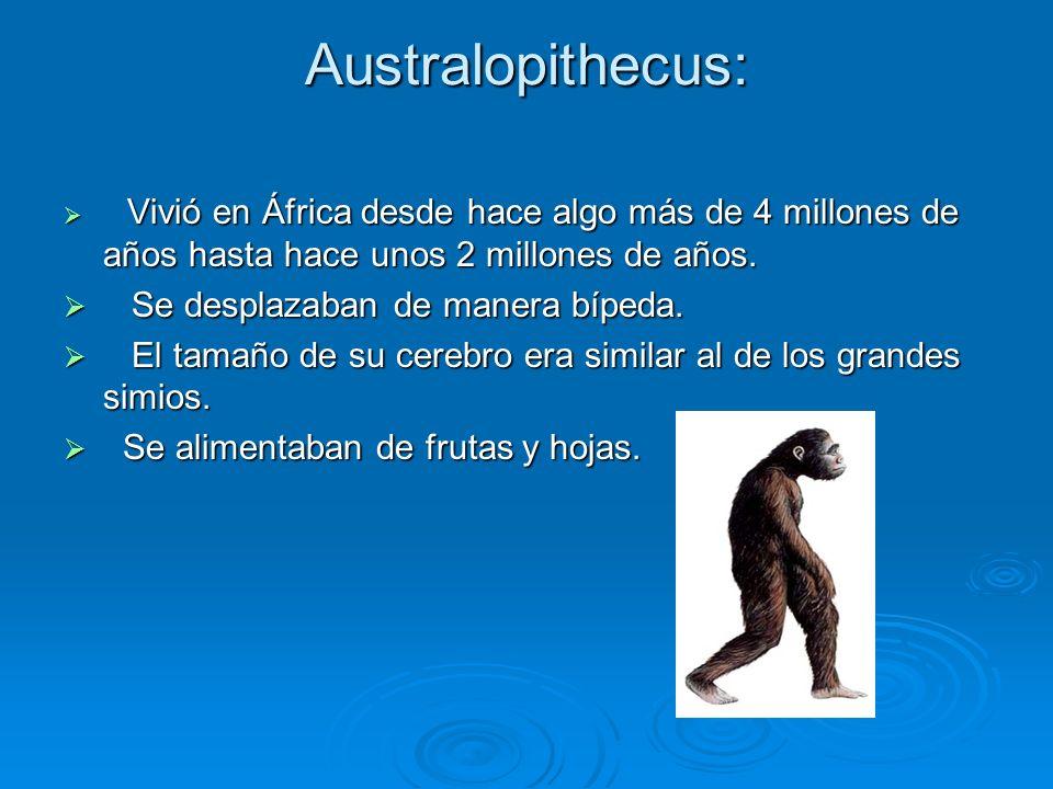 Australopithecus: Vivió en África desde hace algo más de 4 millones de años hasta hace unos 2 millones de años. Vivió en África desde hace algo más de