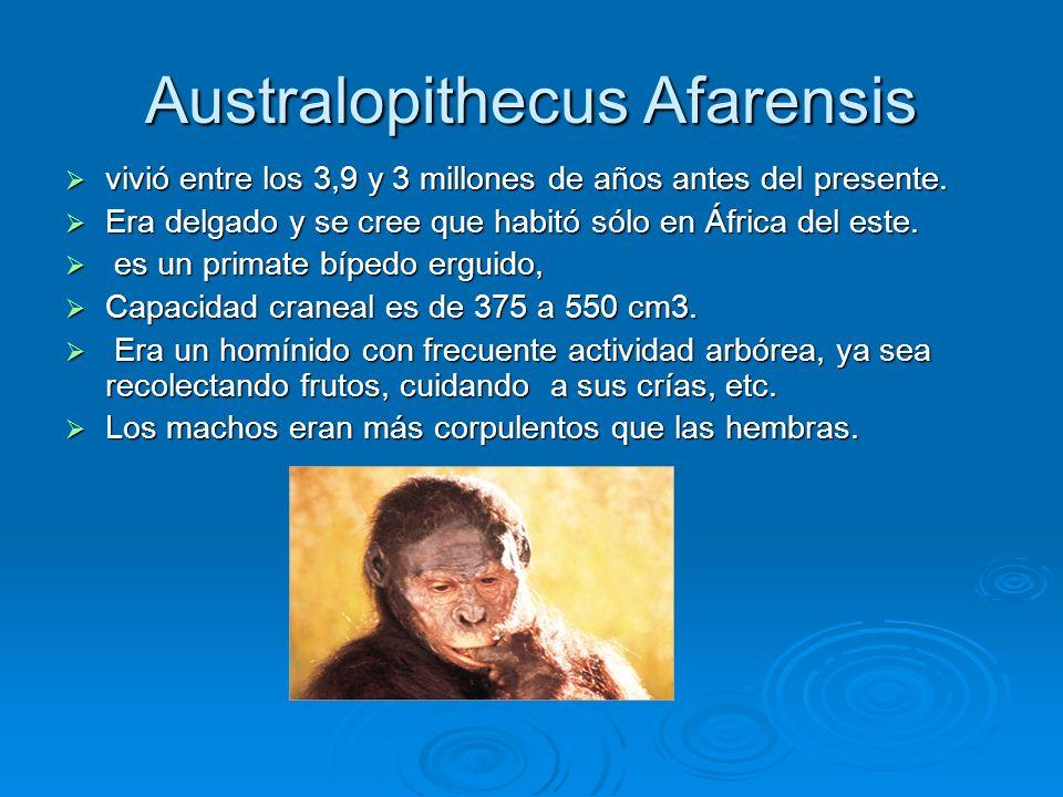 Australopithecus Afarensis vivió entre los 3,9 y 3 millones de años antes del presente. vivió entre los 3,9 y 3 millones de años antes del presente. E