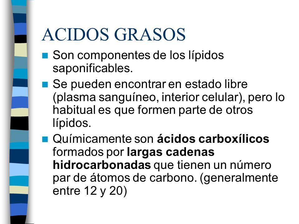 ACIDOS GRASOS Son componentes de los lípidos saponificables. Se pueden encontrar en estado libre (plasma sanguíneo, interior celular), pero lo habitua
