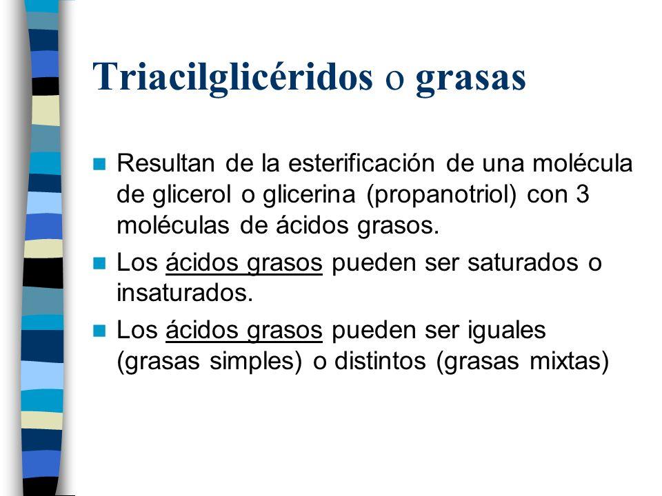 Triacilglicéridos o grasas Resultan de la esterificación de una molécula de glicerol o glicerina (propanotriol) con 3 moléculas de ácidos grasos. Los